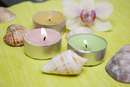 conflagrant: conflagrant candles with the flower of camomile
