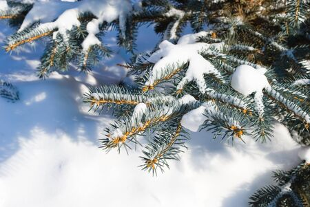 seasonally: branch and snow