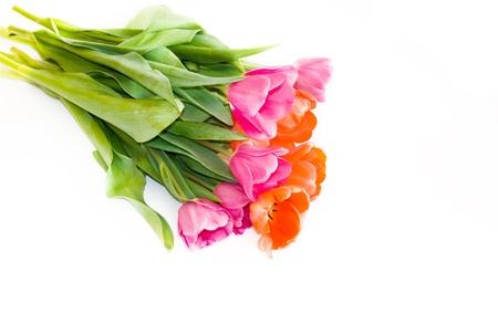 tulips Stock Photo - 10330040