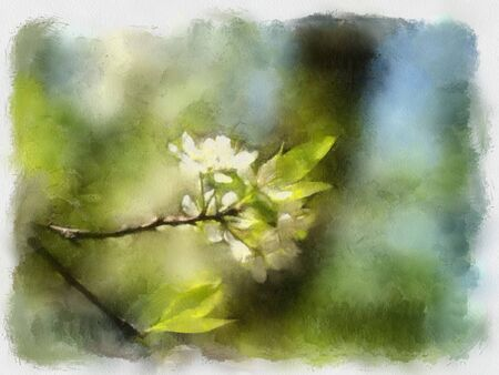 A watercolor picture of a branch of apple tree photo