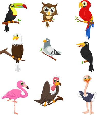 pigeon owl: Bird cartoon collection