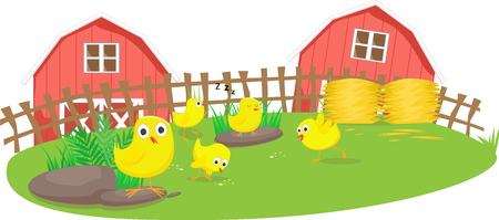 Little chicks play in the farm