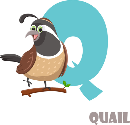 Cute Animal Zoo Alphabet. Letter Q for Quail