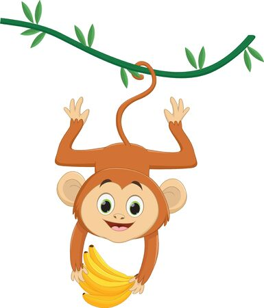 Cute monkey hanging and holding banana on white