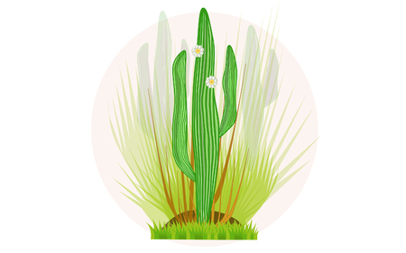 Arizona cactus Saguaro with a shrub.
