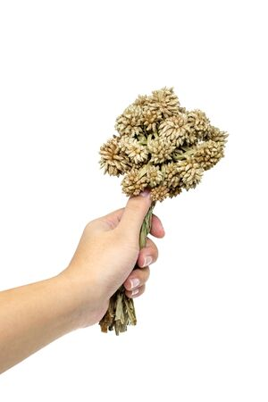 dried flower arrangement: Hand holding bouquet of dry flowers isolated on white background