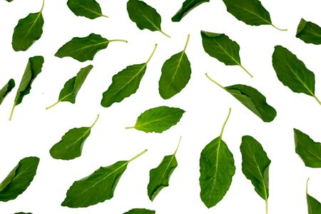 Collection of Green basil isolated on the white background