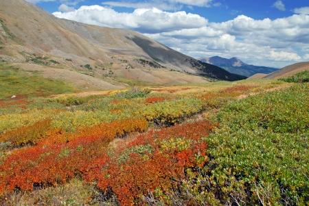 rocky mountains colorado: Fall Color, Rocky Mountains, Colorado Stock Photo