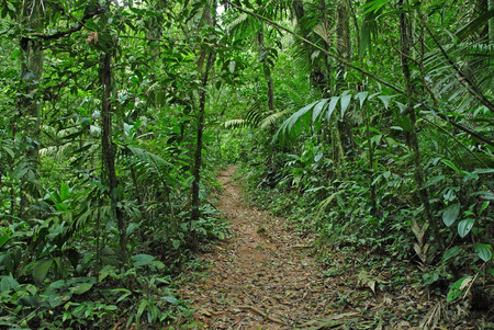 Hiking Trail in Rainforest, Costa Rica photo
