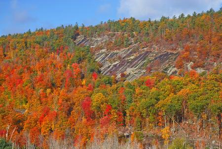 Autumn Foliage  Northeast Fall Colors  Stock Photo