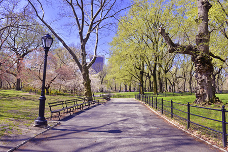 Walking Path, Central Park, New York City photo