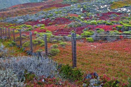 Autumn in the Big Sur Coast, California  photo