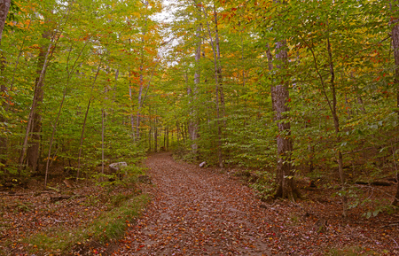 Autumn Foliage  Fall Color in Forest  photo