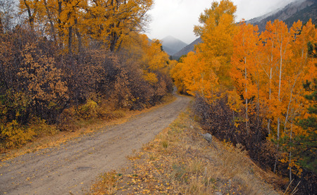 Autumn Color with Fall Foliage, Rocky Mountains, Colorado Stock Photo - 28858748