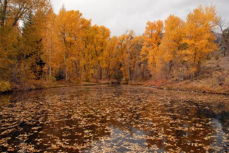 Autumn Color with Fall Foliage, Rocky Mountains, Colorado Stock Photo - 28858749