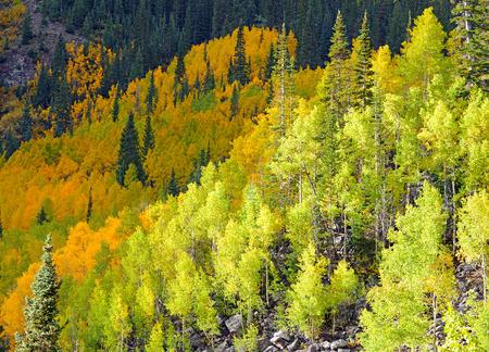 rocky mountains colorado: Autumn Color with Fall Foliage, Rocky Mountains, Colorado
