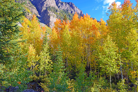 Autumn Color with Fall Foliage, Rocky Mountains, Colorado Stock Photo - 28858752