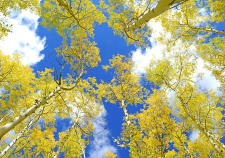 Autumn Foliage with Golden Yellow Aspen Stock Photo - 28515842
