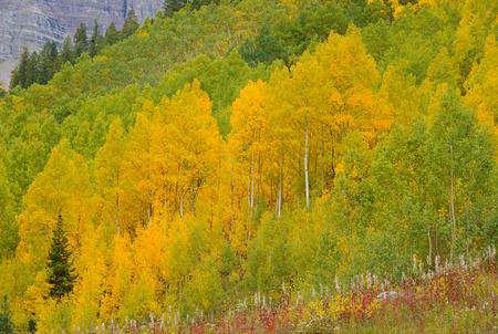 Autumn Color with Fall Foliage, Rocky Mountains, Colorado Stock Photo - 28858757