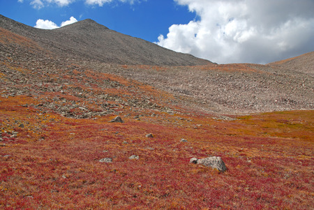 Fall Color near Mount Columbia in the Sawatch Mountains, Colorado photo