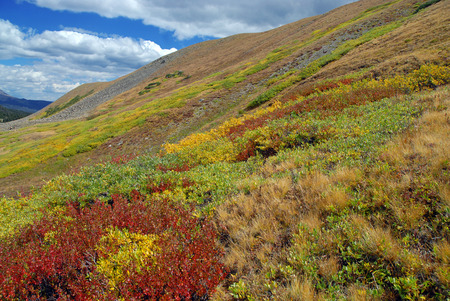 Fall Color in the Sawatch Mountains, Colorado photo