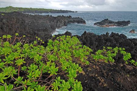 Volcanic Coast, Hawaii Stock Photo