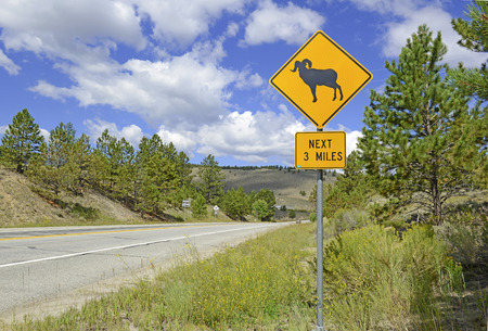 rocky mountain bighorn sheep: Bighorn sheep crossing road safety sign Stock Photo