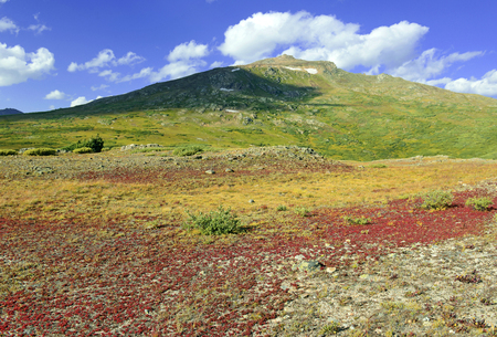 Autumn color in alpine tundra, rocky mountains, USA Stock Photo