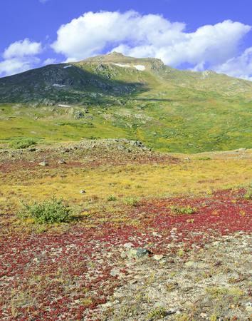 alpine tundra: Autumn color in alpine tundra, rocky mountains, USA Stock Photo