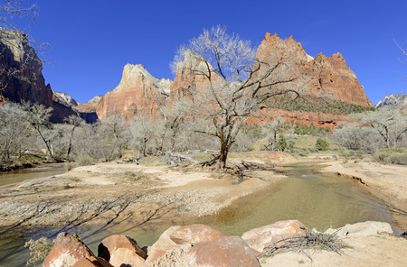 Red rock canyon landscape in Zion National Park, California, USA