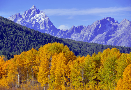 autumn colors: Autumn colors at Grand Teton National Park, Wyoming Stock Photo