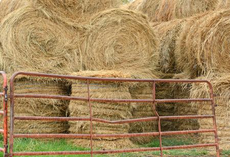 breadbasket: Rolled Hay on farm