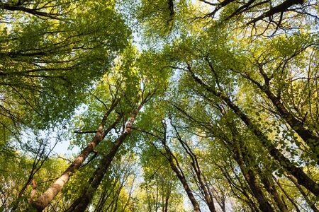 canopy: canopy