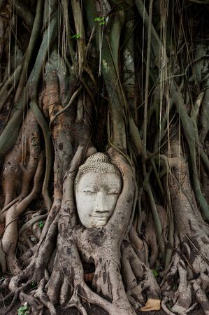 The head of image of Buddha in banyan tree at Wat Mahathat of Thailand photo