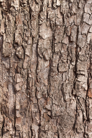 sulcus: Tree bark, abstract texture