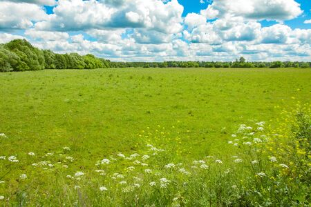 Field, forest and sky, rural landscape