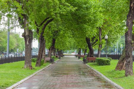 Rainy boulevard, Abelmanovskaya street, Moscow