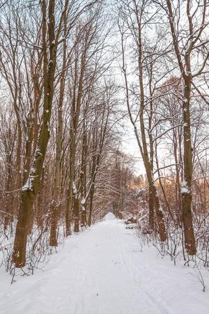 kuskovo: Footpath in snowy winter forest in Kuskovo park, Moscow