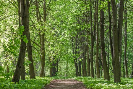 Footpath in a summer sunny forest, beautiful landscape