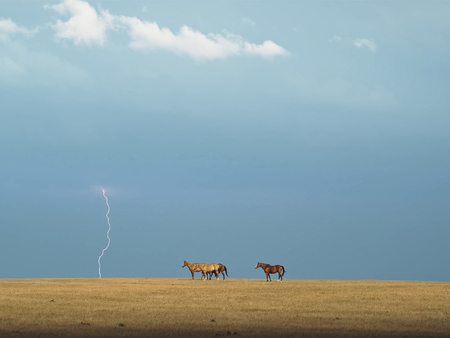 Horses in the steppe. A small herd of horses in a field.