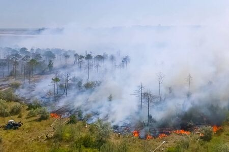 Forest fire, smoke of the surrounding area. smoke and fire.