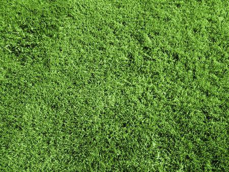 cut grass: Freshly Cut Green Grass