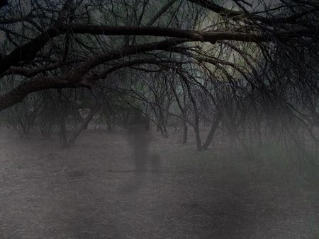 ghostly: Haunting ghost walking through woods Stock Photo