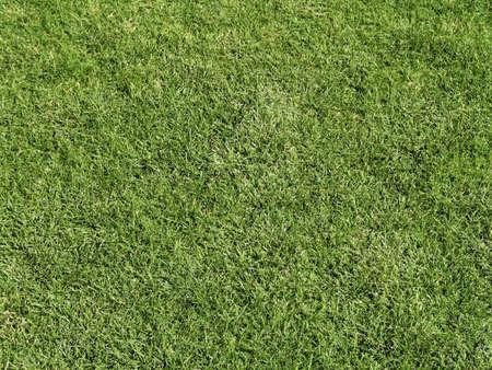 cut grass: Field of Fresh Cut Grass Stock Photo