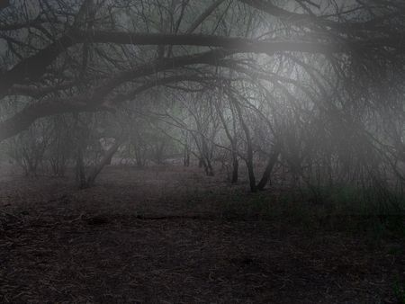 death and dying: Spooky fog scene in woods Stock Photo