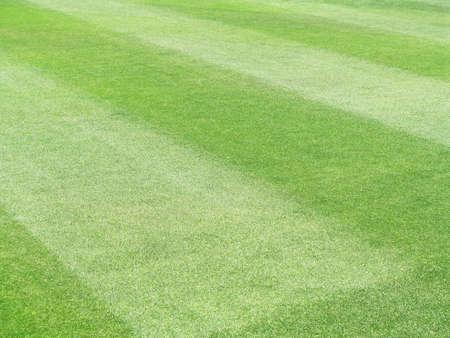 cut grass: Sports field of green grass Stock Photo