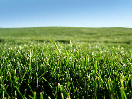 cut grass: Field of fresh cut green grass Stock Photo