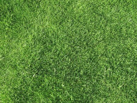 Field of Freshly Cut Grass Stock Photo