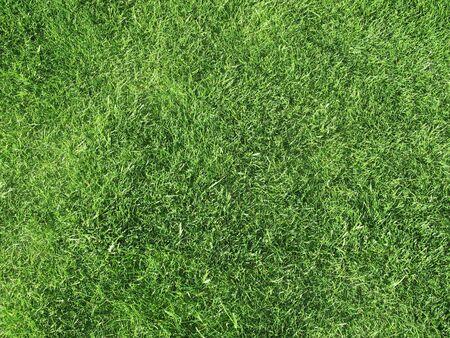 cut grass: Field of Freshly Cut Grass Stock Photo