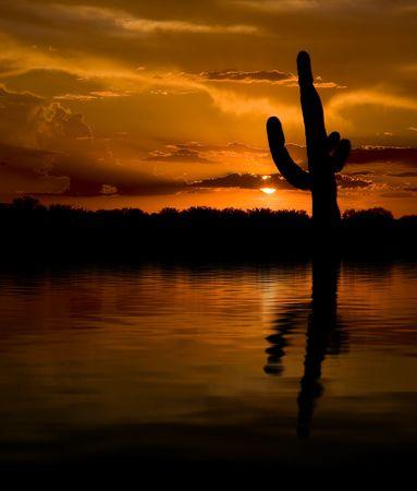 Saguaro, die bei Sonnenuntergang in See Standard-Bild - 5298825